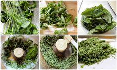 Basil Year Round with Fresh Basil Salt :: Hometalk