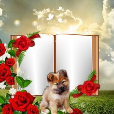 via imikimi: http://imikimi.com/api/v2/itunes_store/app/342563837  this frame: kimi://imikimi.com/kimis/1FA6x-4cv-4