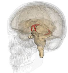 Surgeons at Johns Hopkins have implanted the first investigational deep-brain stimulation device from Functional Neuromodulation, Ltd. (Toronto, Canada), in a study that aims to slow memory loss and cognitive decline in people with Alzheimer's.