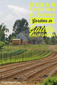 Visiting an urban farm in Goleta, CA