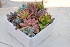 Succulent arrangement in white square by iDreamOfSucculents, $49.95