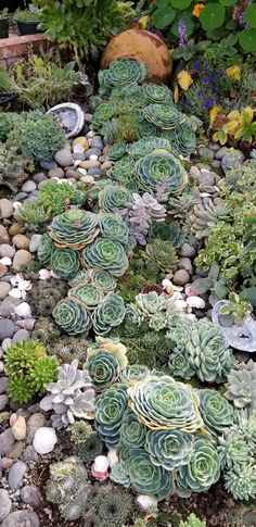 9 Prepared Hacks: Desert Garden Landscaping Cactus garden landscaping with stones pea gravel.Garden Landscaping With Stones Pea Gravel. Succulent Rock Garden, Succulent Landscaping, Succulent Gardening, Front Yard Landscaping, Planting Succulents, Backyard Landscaping, Planting Flowers, Landscaping Ideas, Garden Plants