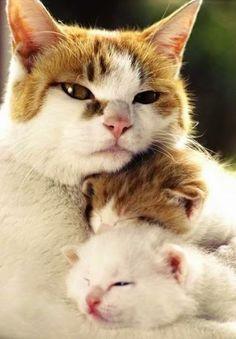 mama cat & kittens.