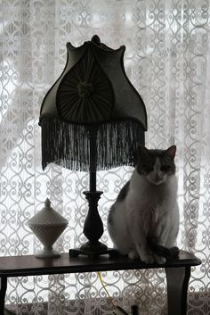 yes..... a cat seems to be part of the decor in most rooms. I had to move the candy dish that used to sit here because I kept finding it on the floor...