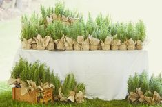 rosemary favors. love.