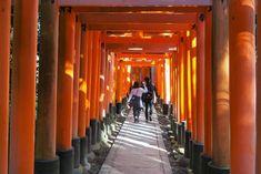 Osaka, Kyoto, Statues, Fushimi Inari Taisha, Travel, Orange Door, Buddhism, Viajes, Effigy