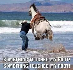 Something Touched My Foot - Horse Goes Flying After Hoof Touches Beach Water ---- hilarious jokes funny pictures walmart humor fails