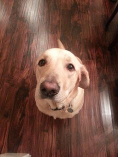 My sister's dog pulled out this face at Thanksgiving. How can I say no? http://ift.tt/2gpkEty