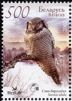 Great Grey Owl (Strix nebulosa) Release date : 2005 Northern Hawk Owl (Surnia ulula) Release date : 2007 Snowy Ow. Strix Nebulosa, World Birds, Postage Stamp Art, Going Postal, Vintage Stamps, Owl Art, Fauna, Free Prints, Stamp Collecting