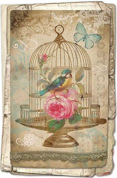 Birdcage with bird, butterfly and pink rose.