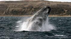 Balade à dos de baleine