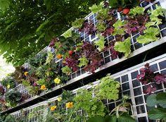 Mur végétal de légumes ©AirGarden Garden, Green, Plants, Air Garden, Agriculture, Gardens Of Babylon