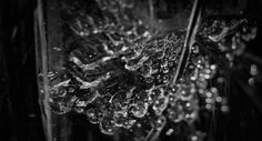 Wet Web 2