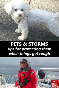 As you're planning for the safety of your boat and yourself, don't forget the furry crew members!  A few tips for them, too . . .  via @TheBoatGalley