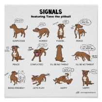 Your Pit Bull and You Getting to know your dog's body language is an important part of building a relationship of trust and understanding. Here Tano the pit bull shows us some typical signals :-) Pit Bull Dogs, Dog Sleeping Positions, Sleeping Dogs, Dog Body Language, Dog Facts, Mundo Animal, Dog Behavior, Dog Quotes, Dog Care