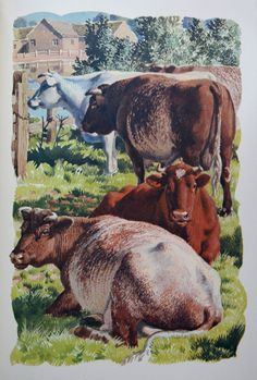 """""""Shorthorns"""" Charles Tunnicliffe - from the book 'Both Sides Of The Road: A Book About Farming' by Sidney Rogerson Children's Book Illustration, Book Illustrations, Nature Artists, British Wildlife, Cow Art, Vintage Farm, Classical Art, Nature Paintings, Typography Prints"""