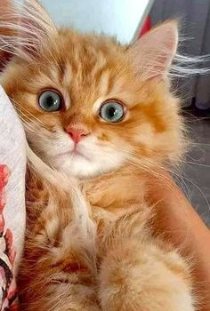 Cute Cats And Kittens Funny Baby Kitty Cute Baby Cats, Cute Little Animals, Cute Cats And Kittens, I Love Cats, Crazy Cats, Kittens Cutest, Pretty Cats, Beautiful Cats, Animals Beautiful