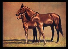 """VINTAGE 1970'S """"LOOK OF A CHAMPION"""" HORSE CALENDAR ART PRINT BY C.W. ANDERSON #Vintage"""
