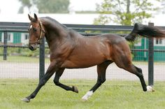 DM Dilinger is a handsome Standardbred stallion who has won over a million dollars.