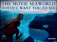 Blackfish... SeaWorld tried to stop the release of this movie but was unsuccessful. l saw this movie and met one of the ex-trainers in the film. Incredibly moving and inspiring. SeaWorld must end their killer whale captivity program.