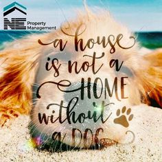 A #house is not a #home without a #dog  #love #puppies #aww #nepm #cute #friends #follow #me #saturday with #family are the #best #life #amazing #photo