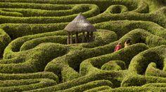 Visitors in the laurel maze at Glendurgan Garden, ©National Trust Cornwall Cornwall Garden, Devon And Cornwall, Falmouth Cornwall, Cornwall England, Ultimate Travel, Days Out, Maze, Amazing Gardens, Britain