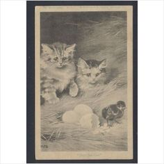 2 Cats and a Just Hatched Chick 1906 Artistic Series Postcard on eBid United Kingdom
