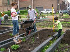 Ruby Community Garden in Schreiber Park  in Chicago, IL