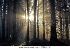 Forest Autumn Foggy Stock Photography | Shutterstock