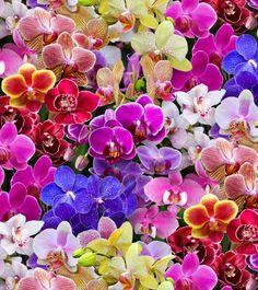 Digitally Printed-Floral D513-multi