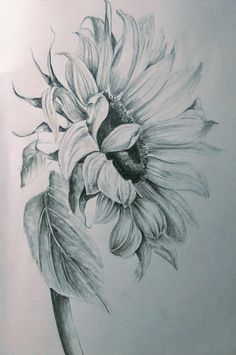 Pencils sunflower drawing, realistic flower drawing, pencil drawings of flowers, sunflower art, Realistic Flower Drawing, Pencil Drawings Of Flowers, Sunflower Drawing, Flower Sketches, Sunflower Art, Sunflower Tattoos, Drawing Sketches, Cool Pencil Drawings, Flower Tattoo Drawings