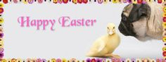 Pug Holiday Themed Facebook Cover Photos For Your Timeline. Pug Easter Facebook Cover Photo