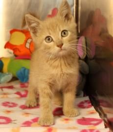 12 / 6      Petango.com – Meet River, a 4 months 25 days Domestic Shorthair / Mix available for adoption in VALLEY FALLS, KS Contact Information Address  15295 K-4 Highway, P.O. Box 57, VALLEY FALLS, KS, 66088  Phone  (785) 945-6600  Website  http://www.jfcountypets.com  Email  jfcountypets@gmail.com