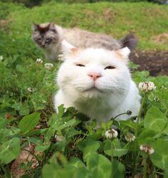 白詰草 - かご猫 Blog
