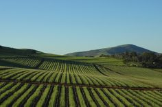 Durbanville winelands - Cape Town. #Durbanville #winelands Best Hospitals, Cape Town, Farming, Countryside, South Africa, Followers, Boards, Lifestyle, City