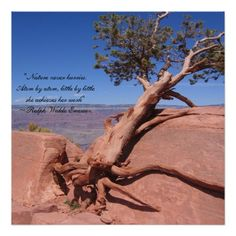 """""""Nature never hurries"""" is the opening of this inspirational quote by famous American poet and essayist Ralph Waldo Emerson. Written in ornate script on an image of a juniper tree clinging to the rim of Grand Canyon National Park in Arizona, this quote will remind you to be patient and persevere. Add it to any room in your home for an uplifting experience.  Photo is by Tammy Winand. Tammy has lived and worked in 11 states and 4 countries. She has spent the better part of the past 7 years at…"""