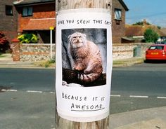 Daily Pictures: Funny Lost & Found Signs