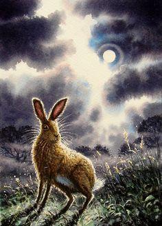 Scared rabbit in Moonlight