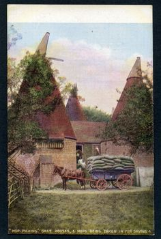 HOP PICKING, OAST HOUSES & HOPS BEING TAKEN IN FOR DRYING unlocated (Farming)