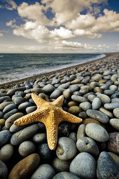 Android Wallpaper, Theme, Background of Starfish on the Beach for your Android Phones. Let's go to the beautiful island and beach for holidays. I Love The Beach, Pretty Beach, Foto Art, Ocean Beach, Pebble Beach, Beach Rocks, Sand Beach, Ocean Art, Ocean Waves