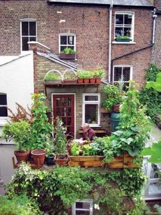 What appears to be a highly productive vegetable garden in a very small space <3!!