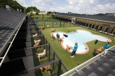 Pet Paradise resort. Not your typical boarding facility. I Love It. Too bad they don't have one in California...yet :-)