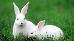 Bring Justice to Animals: Expose Brands That Lie About Animal Testing