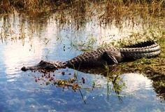 Floridian Nature: Floridian Nature spot of the week: The Everglades