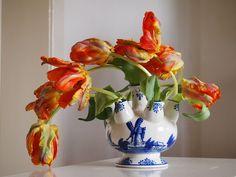 https://www.flickr.com/photos/ycyu/8644735215/in/pool-tulips