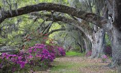 Today, the English-style gardens at Magnolia Plantation feature winding paths lined with native azaleas and antique camellias. (From: Photos: America's Most Beautiful Home and Garden Tours)