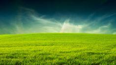 Descargar gratis campo,  Verde,  hierba Fondos de escritorio en la resolucin 1920x1080 — imagen №340879
