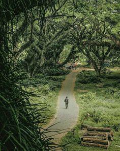 Info lebih lanjut buka webiste kami Tourbanyuwangi.com    Hotline : Kampong Resto Gama, Jl KH Agus Salim no 3A Banyuwangi – Jawa Timur.   Telp   : +62811 341 1712   WA    : +62811 341 1712   Email : info.tourbanyuwangi@gmail.com Travel List, Wonders Of The World, Adventure Time, Natural Beauty, National Parks, Country Roads, Tours, Places, Nature