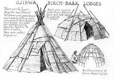 Ojibwa. The tribe that my maternal line travels through.