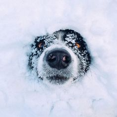 Winter Skin Care For Dogs